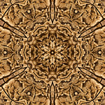 Cinnamon Delight Chrysanthemud