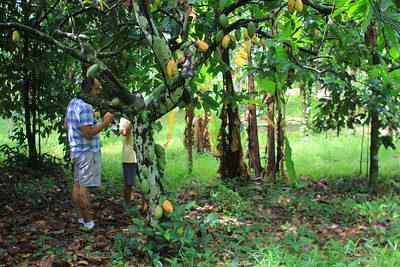 Tour to the cacao farm