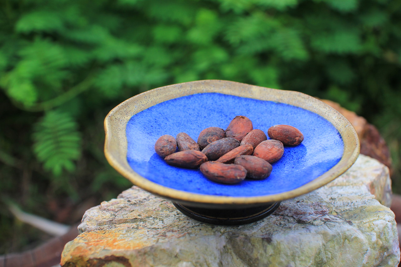 Cacao beans on a blue plate