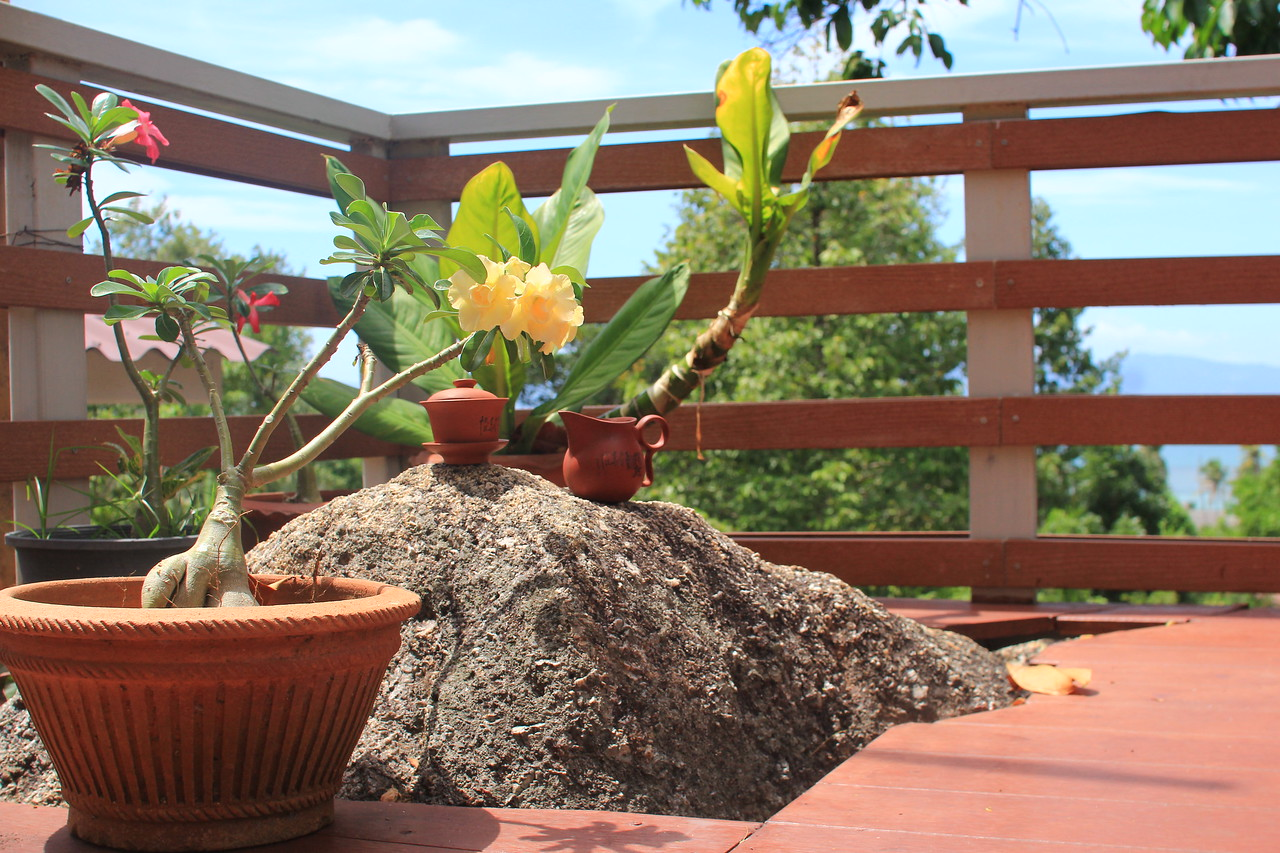 Bonsai blossoming at Meridian Khao Tam