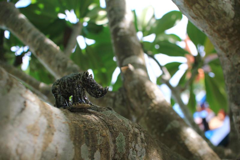 appearance of Rhino