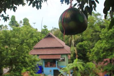 Baan Kan Khao daytime shoots