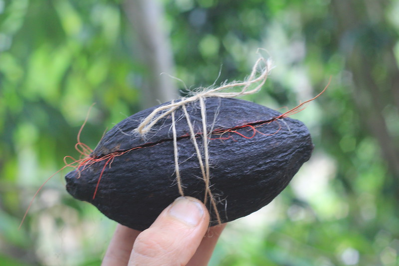 Cacao pod as a gift-box