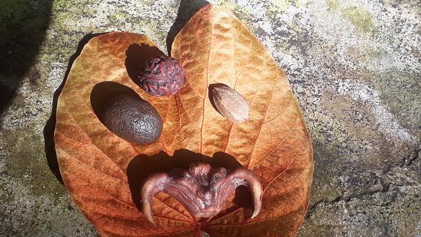 Pili nuts in NakhonSI