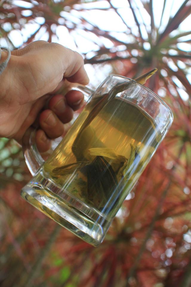 Herbal Tea Plants in glass