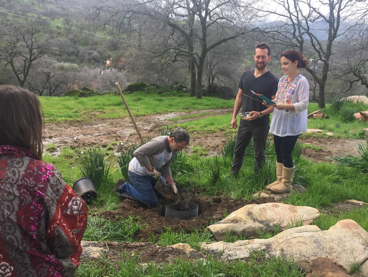 Wedding Tree Planting - The Longstreet/Rudisill redbud tree