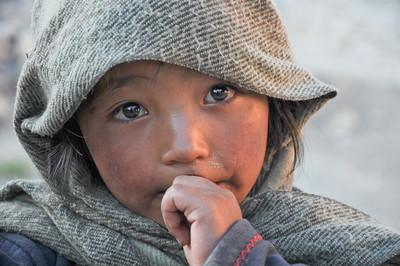 Wild Ladakh + Rupshu Trek 2011