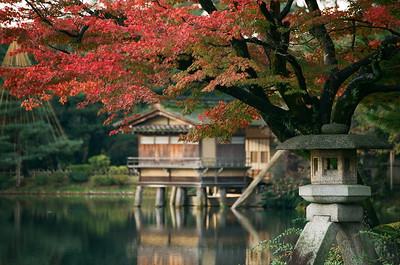 Kanazawa Fall Foliage, image copyright elcapitanbsc