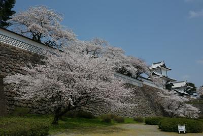 Kanazawa Cherry Blossoms, image copyright craiga