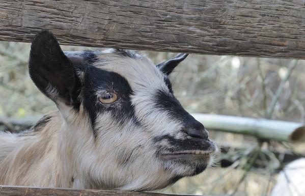 Return from Kanchenjunga