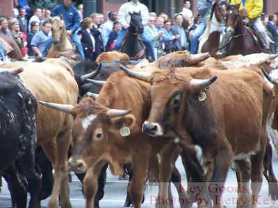 KC Cattle Drive 10-12-07