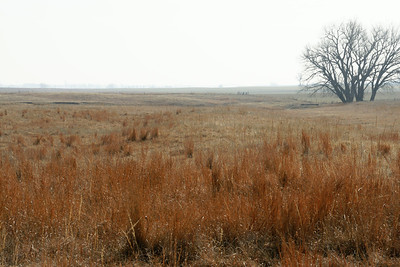 Ralph's Ruts in western Rice County, Kansas.One of the best preserved sections of Santa Fe Trail ruts in Kansas. For more information see the following:   http://www.santafetrailresearch.com/research/ralphs-half-mile-of-trail.html