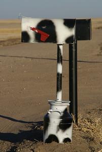Holstein black and white mailbox - Sheridan County