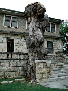 Post office oak. A cache at the base served as a Post Office for Santa Fe Trail from 1825 - 1847.