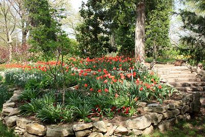 Tulip beds. Photo by Karen.