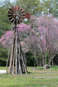 Windmill. Photo by Karen.
