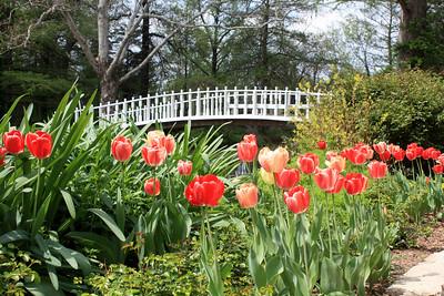Tulip beds with bridge. Photo by Karen.
