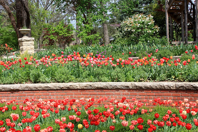 Tulip beds and brick walls. Photo by Karen.