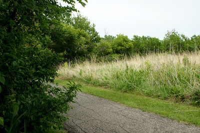 Path along creek and prairie grass planting