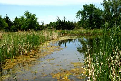 Pond along walkway