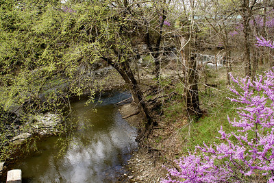 Redbud bushes and Polecat Creek seen from Red Bud bridge - northwest Cowley County