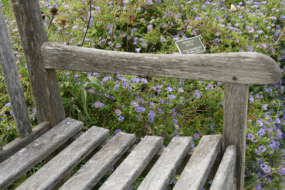 Bench and asters