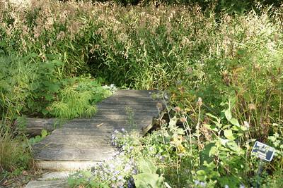 Grasses and wood bridge