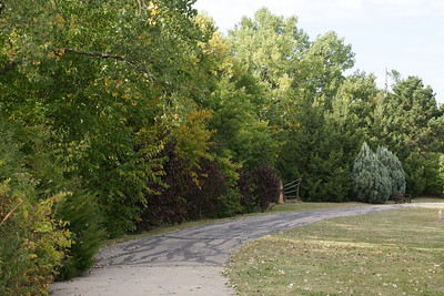 Trees along walk