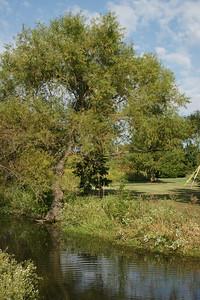 Trees along stream