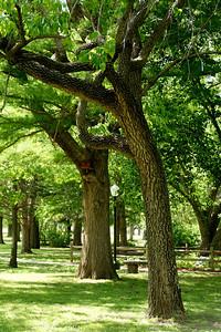Trees along walkway in Lemon Park in Pratt