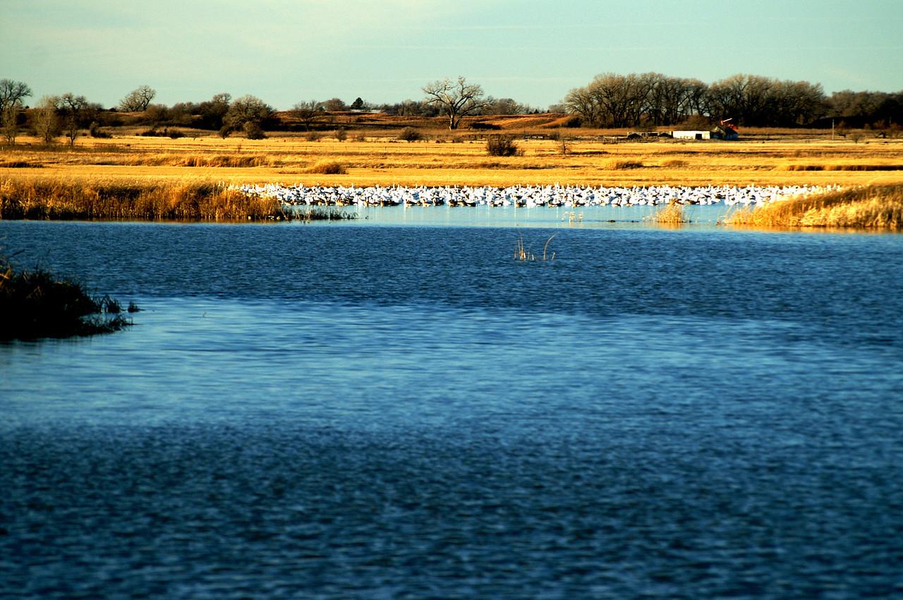 Birds on the Big Salt Marsh