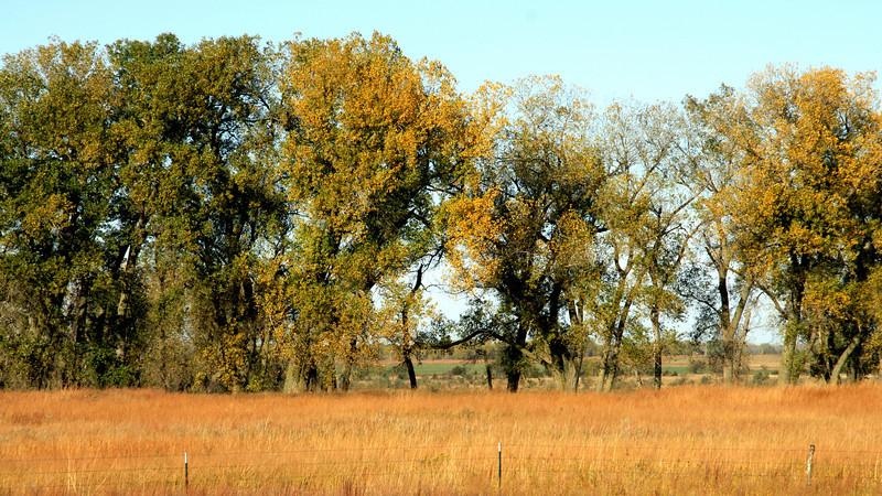 Tree line near Big Salt Marsh