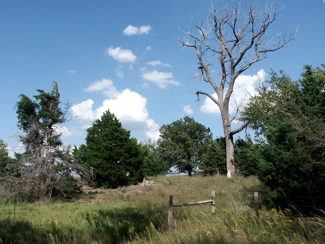 Trees near Little Salt Marsh