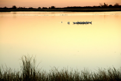 Birds on Little Salt Marsh at first light of day
