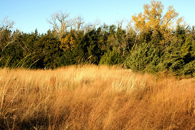 Tree line and grasses near visitor center