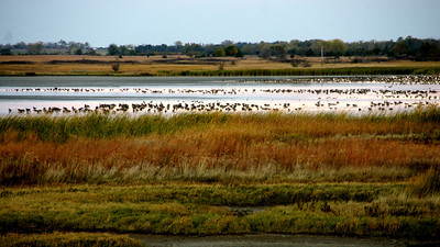 Birds on Little Salt Marsh
