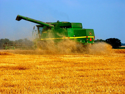 Combine cutting wheat in western Sedgwick County