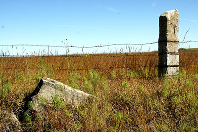 Fence post and barb wire