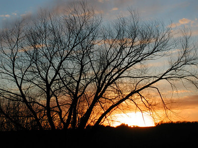 Sunset thru tree - Reno County