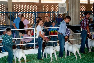 ks_state_fair_2019_goats-2