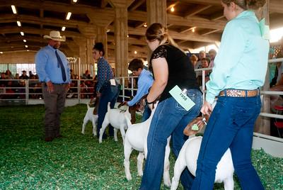 ks_state_fair_2019_goats-17