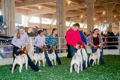 ks_state_fair_2019_goats-8