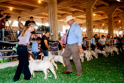 ks_state_fair_2019_goats-13