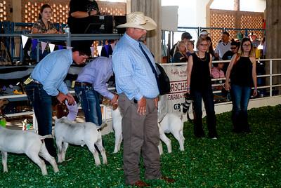 ks_state_fair_2019_goats-3