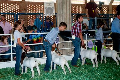 ks_state_fair_2019_goats-1