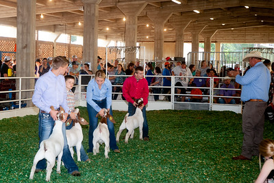 ks_state_fair_2019_goats-5