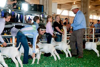 ks_state_fair_2019_goats-20