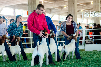 ks_state_fair_2019_goats-11