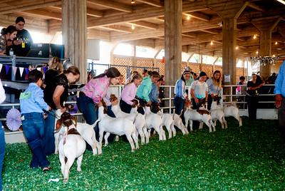 ks_state_fair_2019_goats-12