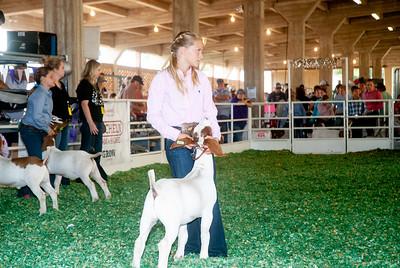 ks_state_fair_2019_goats-24